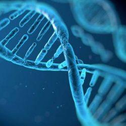 Primul pacient cu distrofie musculara tratat in studiul terapiei genice Follistatin